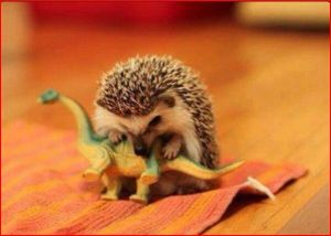 chomping hedgehog